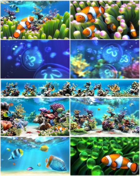 Sim Aquarium 3.8 Build 58 Premium